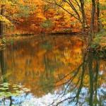 紅葉と大沼
